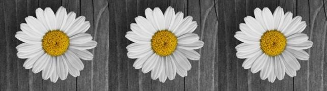 Цветы и растения_618