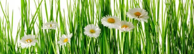 Цветы и растения_620