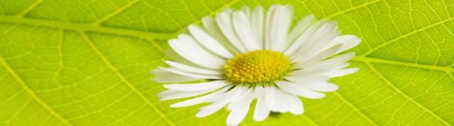 Цветы и растения_628