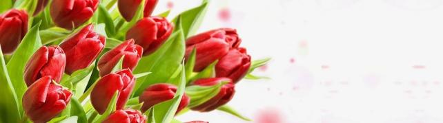 Цветы и растения_62