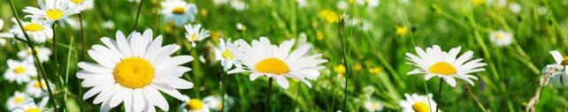 Цветы и растения_630