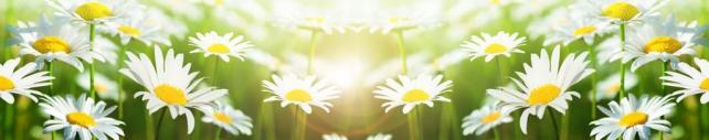 Цветы и растения_631