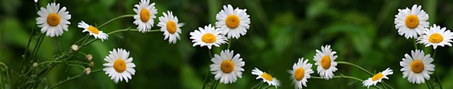 Цветы и растения_632
