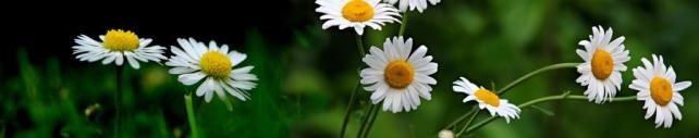 Цветы и растения_634