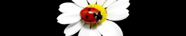 Цветы и растения_635