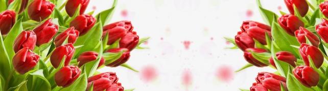 Цветы и растения_63