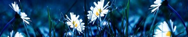 Цветы и растения_642