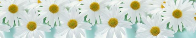 Цветы и растения_643