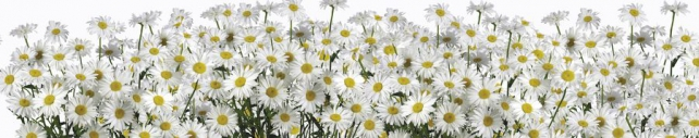 Цветы и растения_646