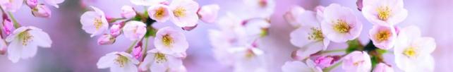 Цветы и растения_651