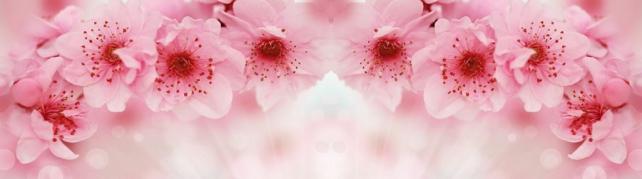 Цветы и растения_655