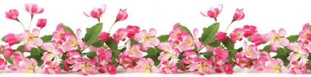 Цветы и растения_659