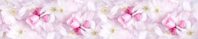 Цветы и растения_662