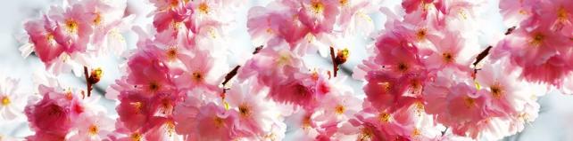 Цветы и растения_664