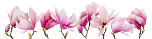 Цветы и растения_669