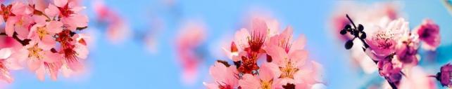 Цветы и растения_673