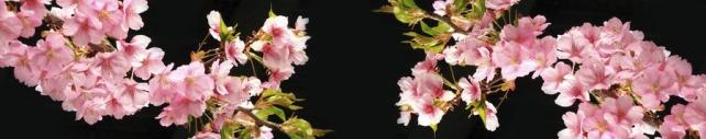 Цветы и растения_674