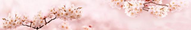 Цветы и растения_676