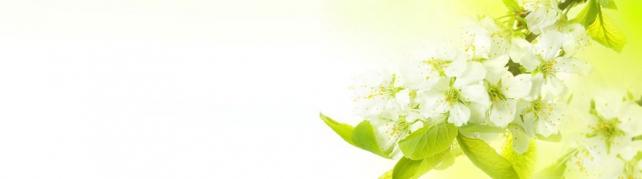Цветы и растения_680
