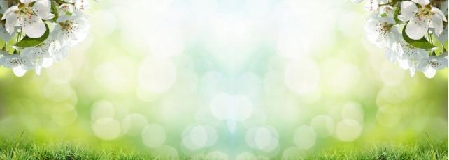 Цветы и растения_682