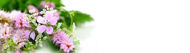 Цветы и растения_683