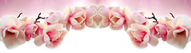 Цветы и растения_685