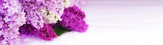 Цветы и растения_686