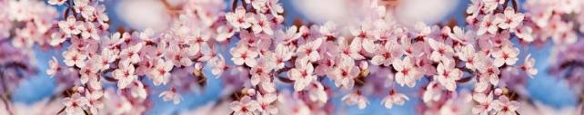 Цветы и растения_688