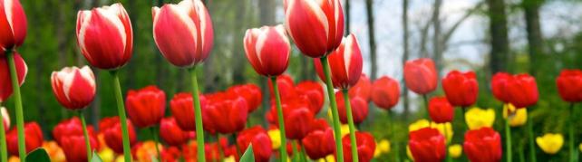 Цветы и растения_68