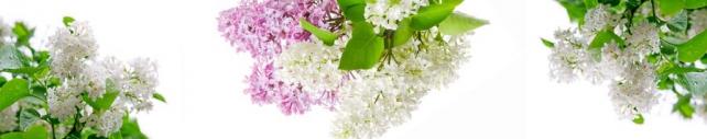 Цветы и растения_691