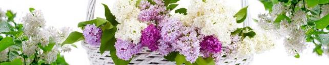 Цветы и растения_692