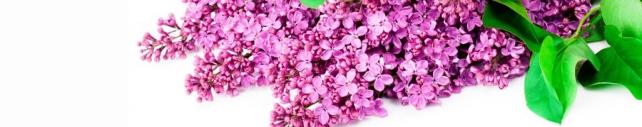 Цветы и растения_696