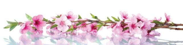 Цветы и растения_697