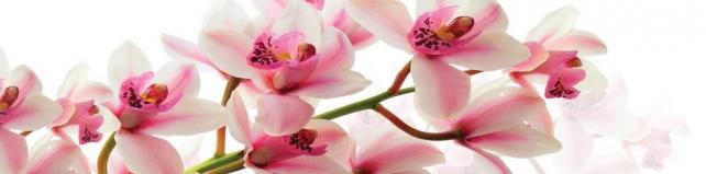 Цветы и растения_699