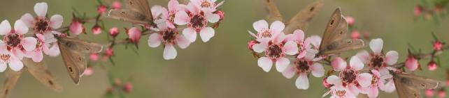 Цветы и растения_700