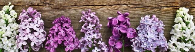 Цветы и растения_706