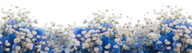 Цветы и растения_708