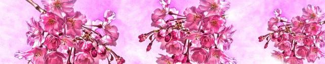 Цветы и растения_717