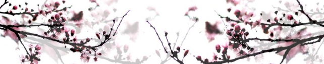 Цветы и растения_718