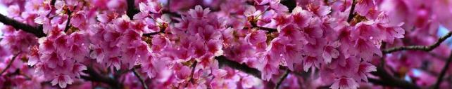 Цветы и растения_719