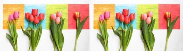 Цветы и растения_71