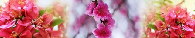 Цветы и растения_721