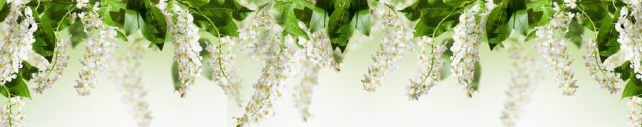 Цветы и растения_722