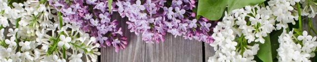 Цветы и растения_724