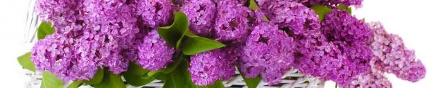 Цветы и растения_725