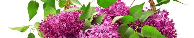 Цветы и растения_726