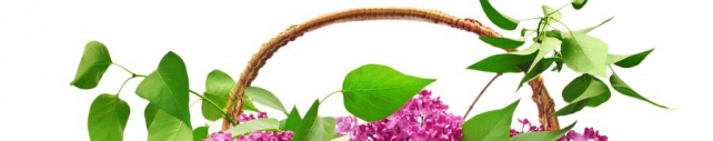 Цветы и растения_727