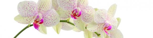 Цветы и растения_731