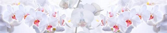 Цветы и растения_736