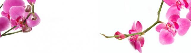 Цветы и растения_739